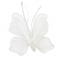 Fairy Tale Activities ~Creation of a Butterfly~